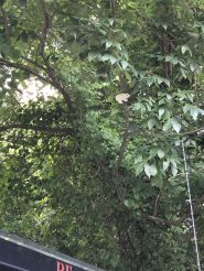 An elephant hides in a tree on the Buffalo Creek Greenway in Smithfield.