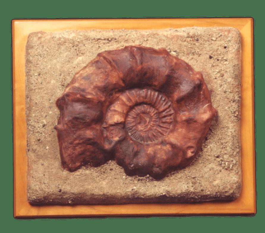 Ammonite Tile