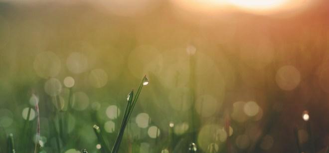 wet grass glow
