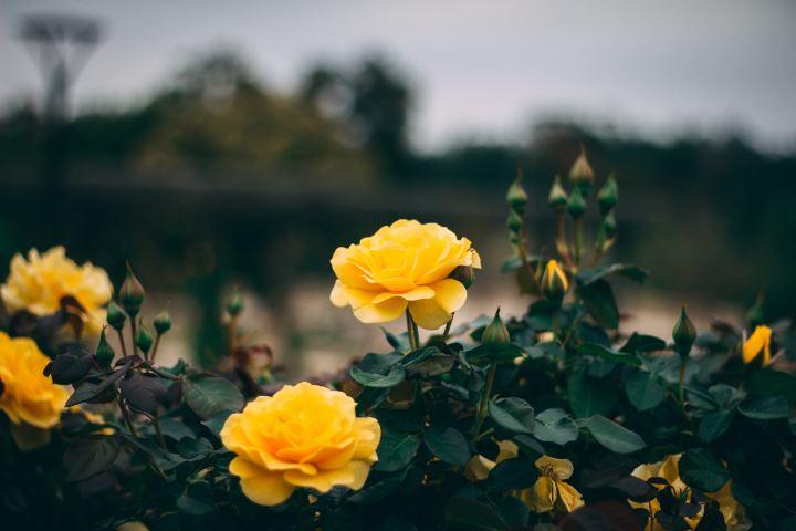 five things bringing me ordinary joy