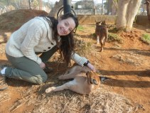 We spent some time with caracals (sometimes called the African lynx)
