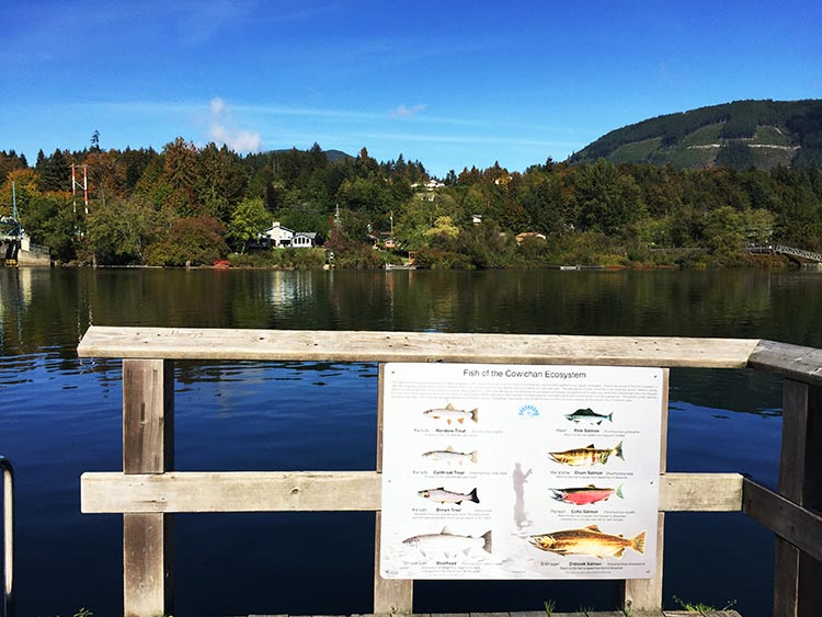 There are all kinds of fish in Lake Cowichan, apparently. After Joe was done fishing, they were all still there!