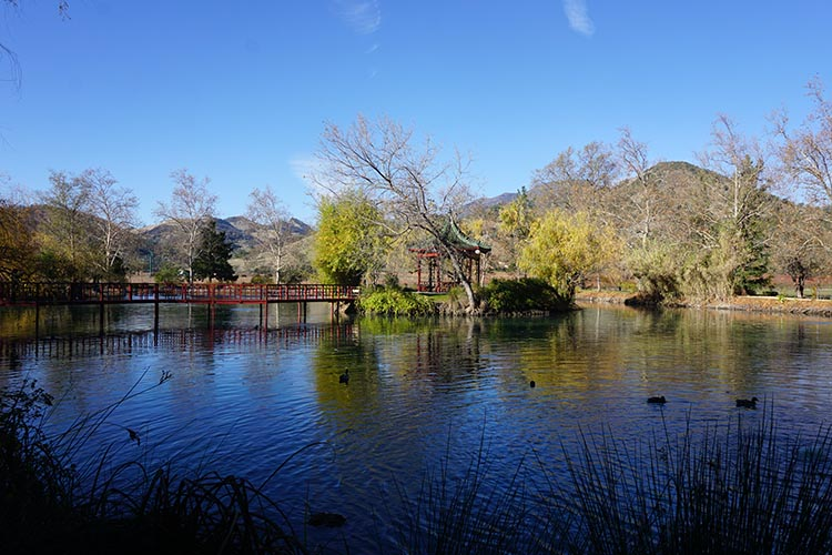 Winery Tours in Calistoga, Napa Valley, California. In the garden at Chateau Montelena, there are wooden bridges leading to small picnic areas and two swans, along with many ducks