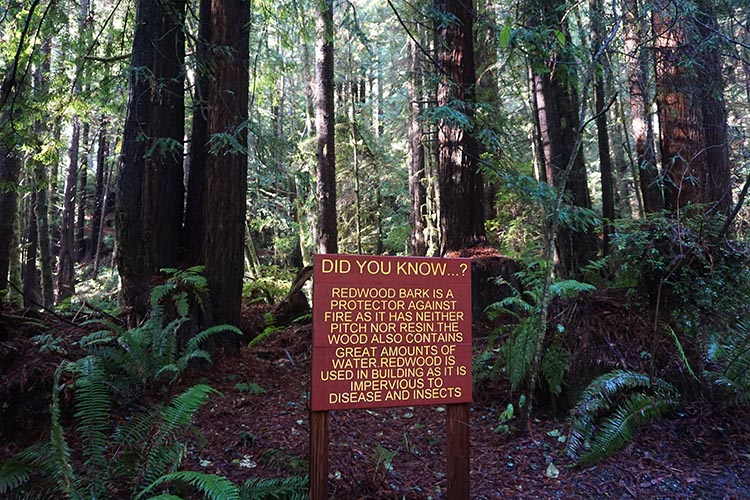RV Camping Under the Giant Redwoods of Northern California. We learned about redwood trees by reading the signs along the way