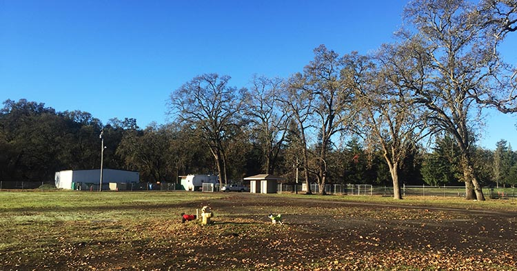 There is no dog off-leash area in the Calistoga RV Park, but we were able to let our dogs off-leash in the adjoining fairgrounds