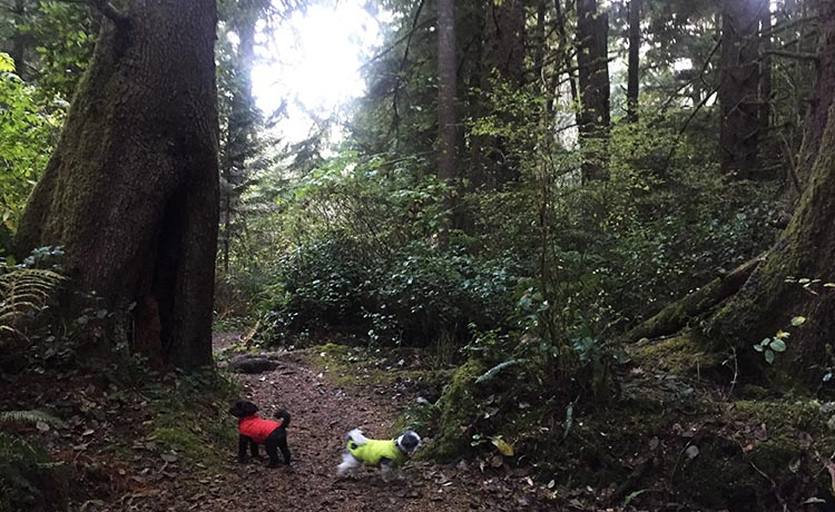 Review of Beverly Beach State Park, near Newport, Oregon. Joe found that he could let our dogs off leash in one of the closed loops inside Beverly Beach State Park