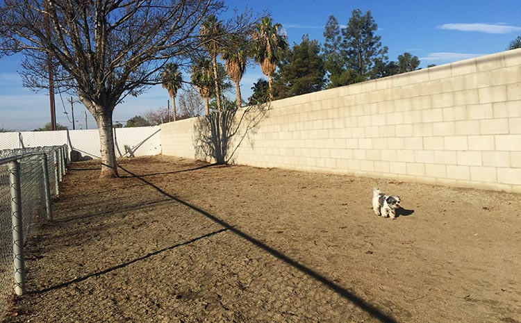 Review of A Country RV Park, Bakersfield, California. Here is our dog Ripley in the dog run at A Country RV Park, Bakersfield, California