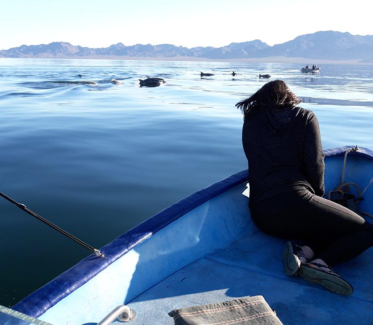 Spotting dolphins at Santispac Beach. Photo by Jerry Robb