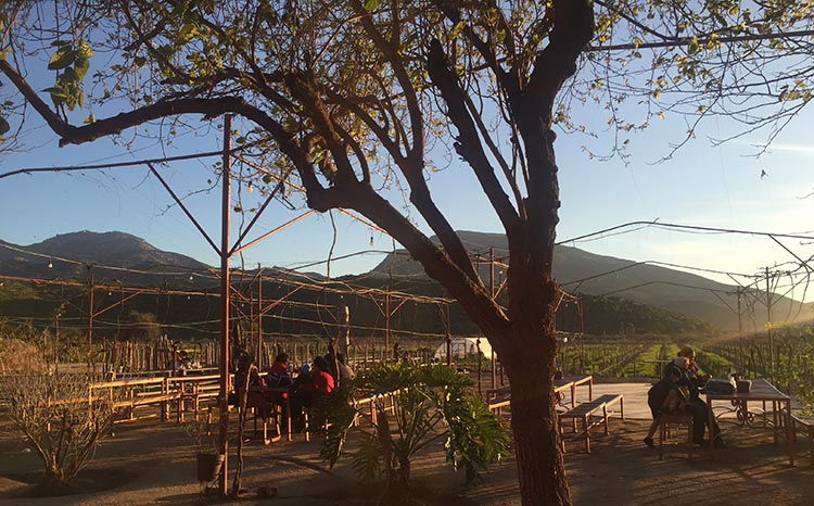 The vineyards at La Casa de Dona Lupe