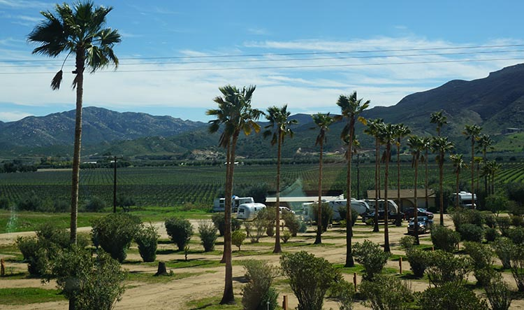 Our Return RV Caravan Trip from Baja California: Santispac Beach to Tecate. Sordo Mudo is right in the Baja winelands