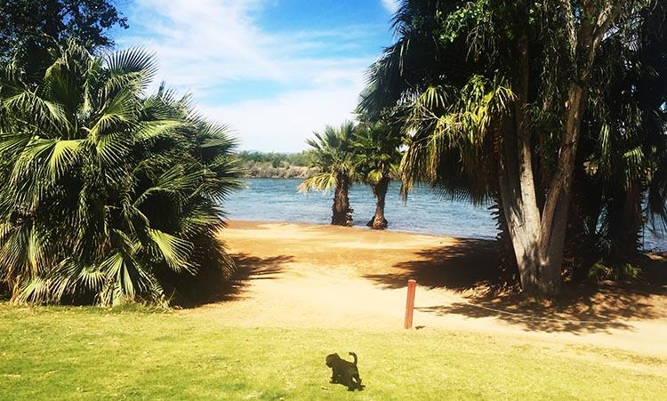 Billy enjoying his freedom near the Colorado River at Arizona Oasis