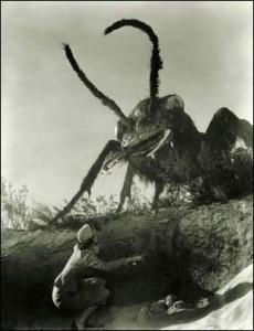 Ant attack on Dr. Pat Medford