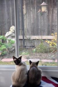 CAT TV Mondays