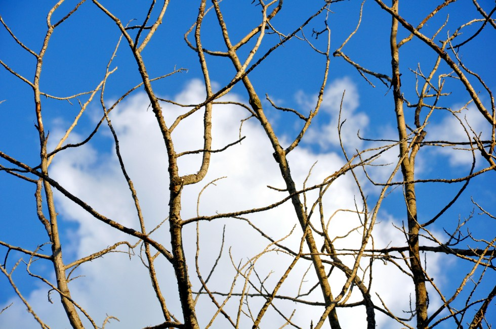 Minnesota Sky and Tree -- 2015