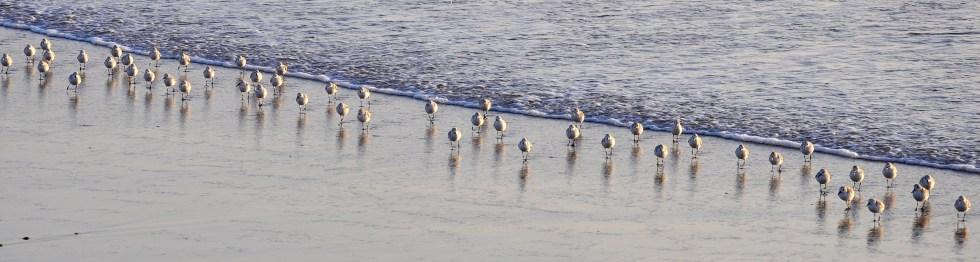 Huntington Beach Surf Birds