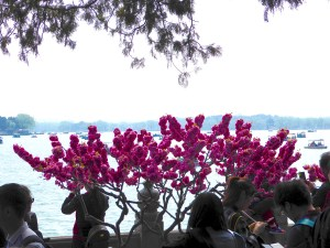 ...including cherry blossoms