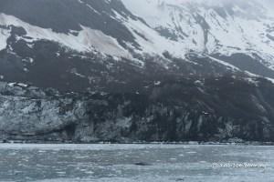 Pieces of ice in Glacier Bay