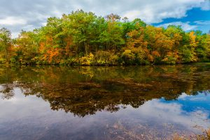 Reflections of colorful Trees in Shark River