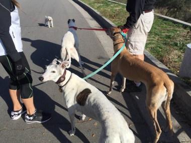 new greyhound friends
