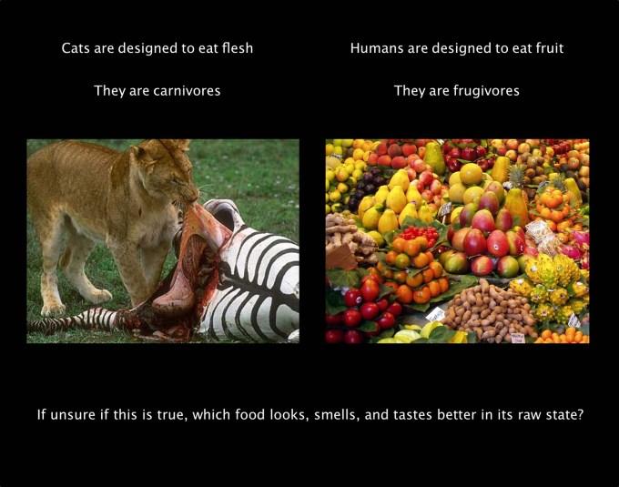 Carnivores VS Frugivores