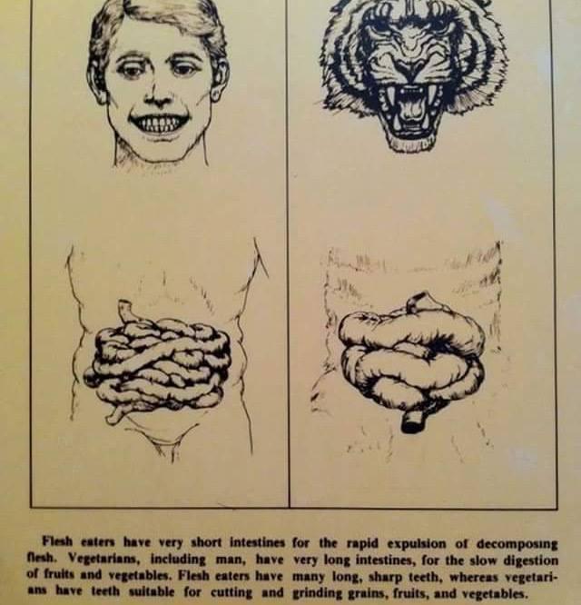 frugivore vs omnivore