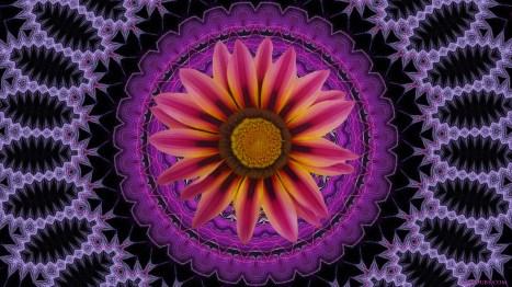 Flower Geometry 9