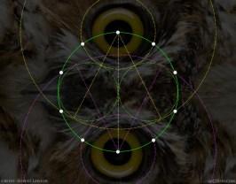 Pentagon Decagon Owl