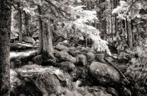 Shooting Infrared in Arapaho National Forest
