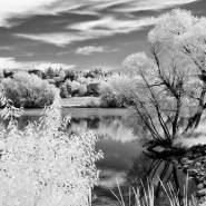 Infrared Capture: Filter or Conversion?
