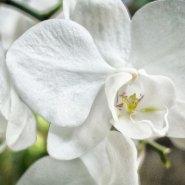 Travel Tuesday: Audubon House Garden, Key West
