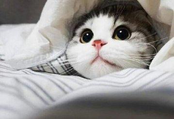 love this cat