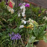 Image of a flower garden with orchids in Royal Botanic Gardens