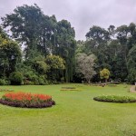 Image of a one of the garden areas within Royal Botanic Gardens.