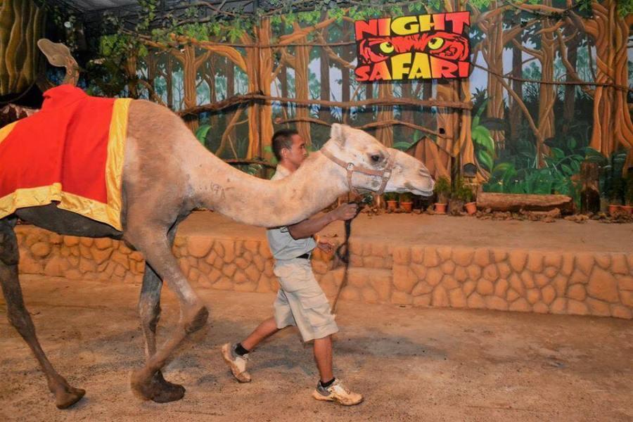Zoobic Camel.jpg
