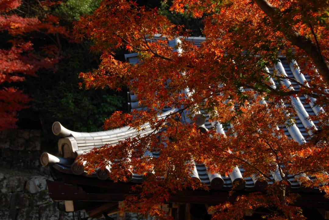 autumn-leaves-kyoto-japan