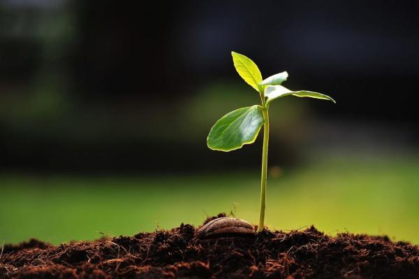 seed growing 1280x800