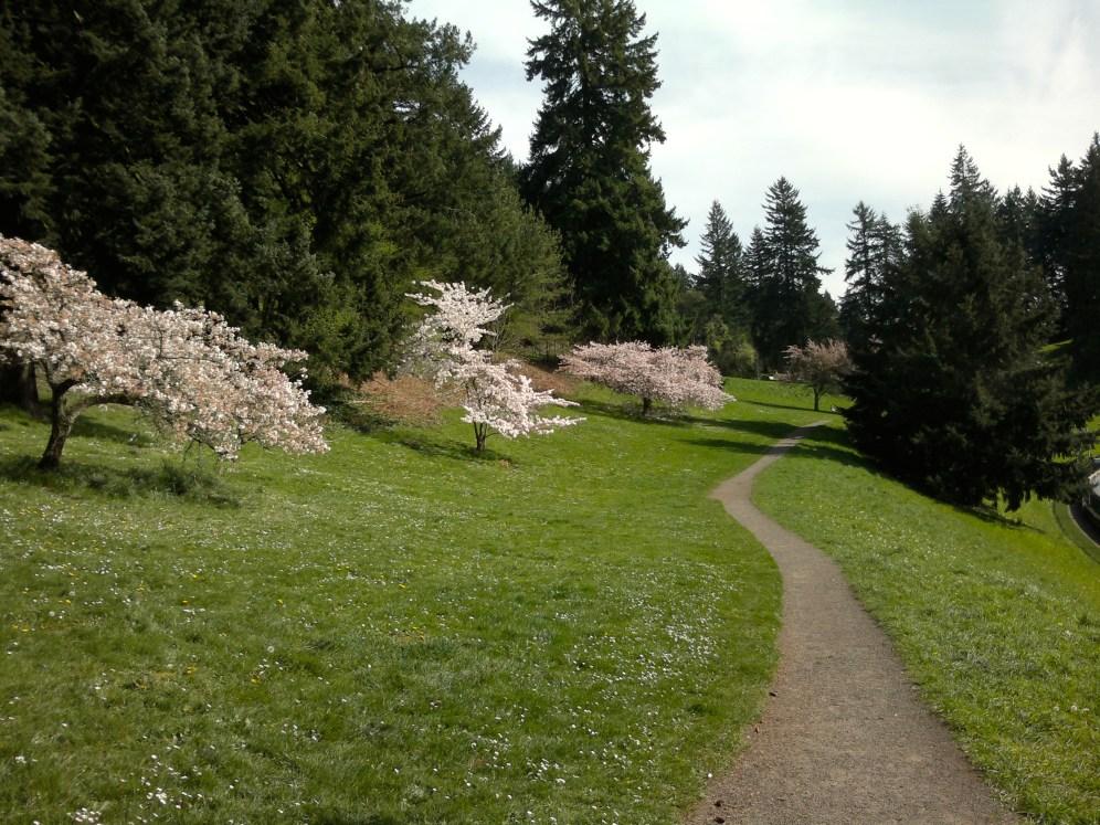 Cherry tree trail through park