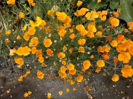 Orange you glad this isn't a poem?