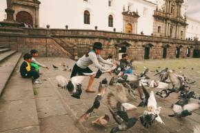 Catching pigeons in Ecuador