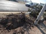 derriban árboles (9)