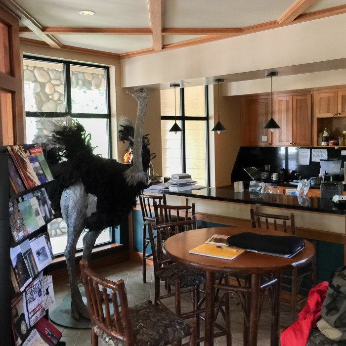 writing-house-coffee-ostrich