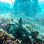 Horn shark idling as we take video and pictures.