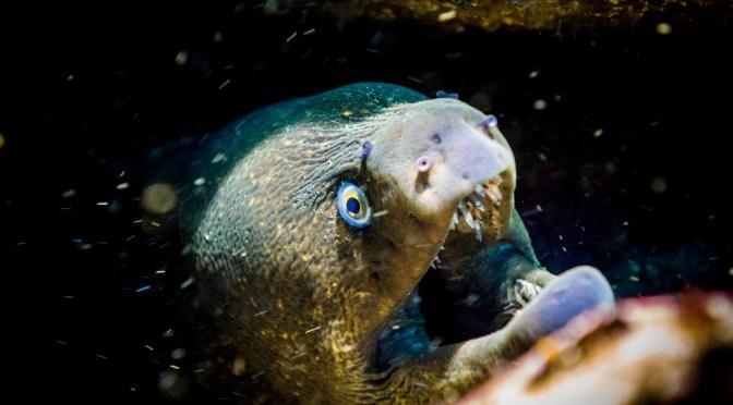 Avalon Dive Park, Catalina Island