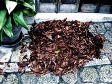 Blätter, Valldemossa © Kruth 2014