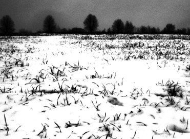 Halme © Kruth 2015