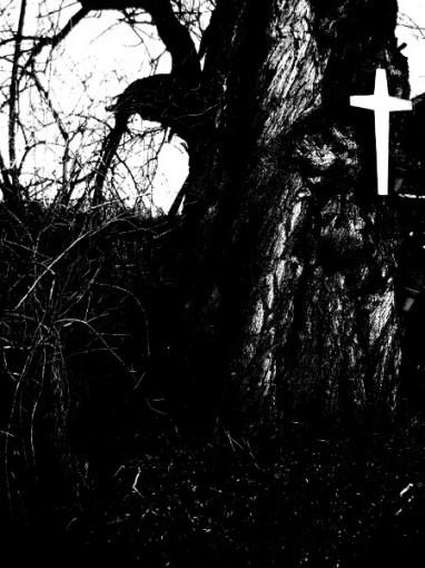 der alte Baum © Kruth 2015