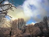 Winterbäume © Kruth 2014