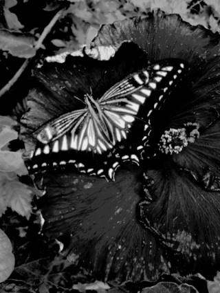 Flügel auf Blume © Kruth 2015