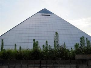 Weeds at the Pyramid