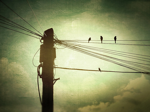 A Bird on a Wire – Law of Power Position
